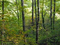 The Pollino forest