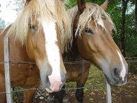 Due stupendi cavalli