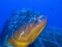 Incontri sottomarini