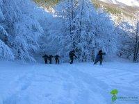 Sentieri ricoperti di neve