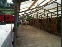 Lezioni equitazione Riviera