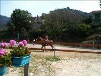 esercizi equestri in campo