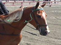 Amiamo i cavalli