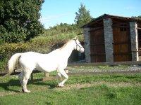 I cavalli prima della partenza