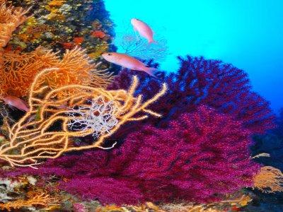Capoliveri single sub diver