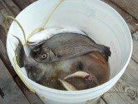 Pesca al bolentino