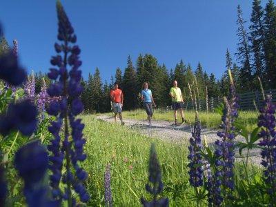Le Macinaie Nordic Walking