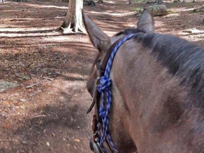 Booking Amiata Passeggiate a Cavallo