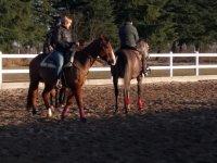 a cavallo in coppia
