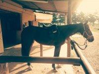 Cavallo in box