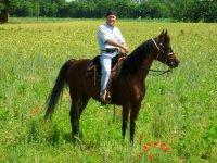 Nel prato verde a cavallo