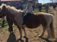 Pony e bambini