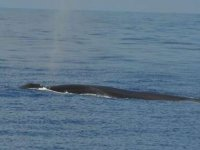 Dorso di balena