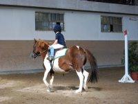 Scuola pony nel territorio triestino.JPG