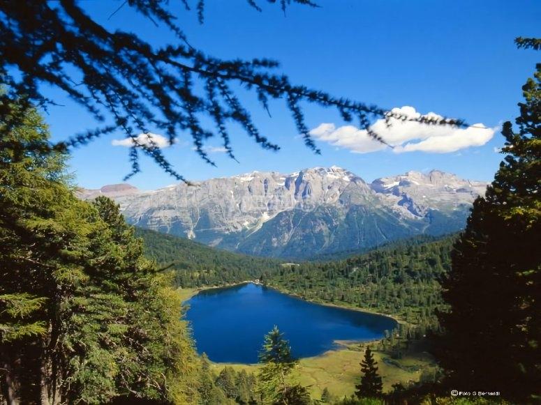 Il bosco e le montagne