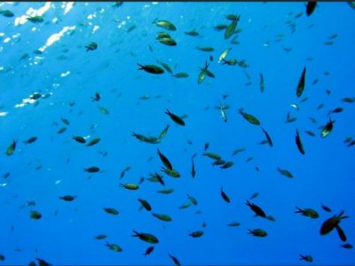 Big Khauna Diving Diving