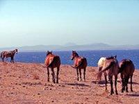 A cavallo in Liguria