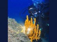Dive diving south Sardinia