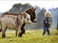 cuccioli di equino e cuccioli di uomo