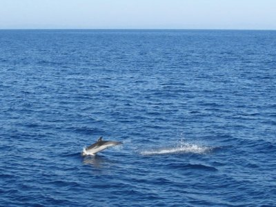 Toscana Minicrociere Whale Watching