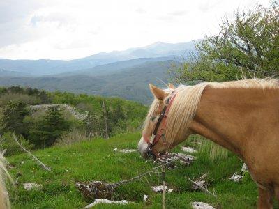 Mezza pensione + 2 ore equitazione Castel Azzara