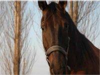 Corsi di equitazione classica sul litorale