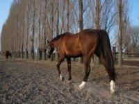 Magnifici cavalli del circolo a Lignano