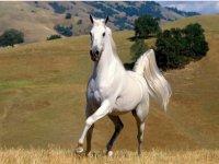 percorsi di Equitazione, Agonismo e Attacchi in Toscana