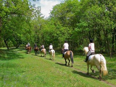 L'AltraToscana Passeggiate a Cavallo
