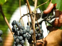 L arte del buon vino