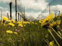 passeggiate in mtb nei colori dellam primavera