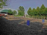 Organizzazione stage equestri nel parmense