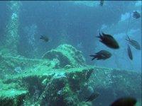 Pesci sul relitto