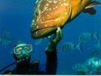 In acqua con i pesci