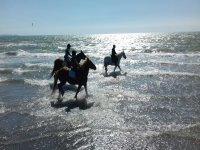 Mare e cavallo