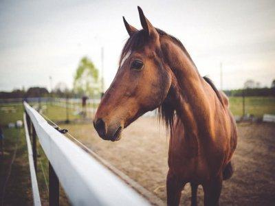 Parco Avventura Falcare Passeggiate a Cavallo