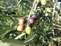 Tasting of extra virgin olive oil
