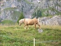 cavalli in malga