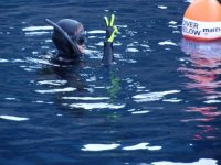 Corso snorkeling