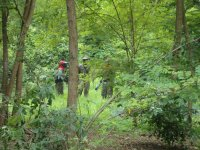 Strategia tra gli alberi