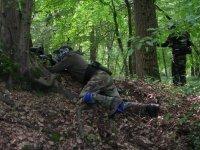 Mimetizzazione nel bosco