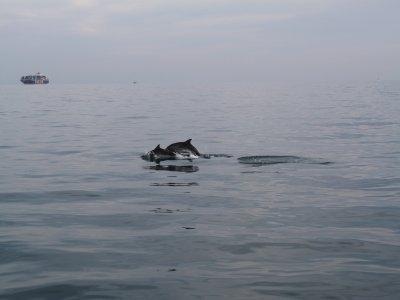 Associazione Per Il Mare Whale Watching