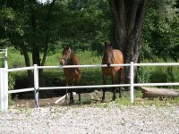 Riding Club immersed in the green