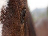 Comunicazione con il cavallo