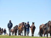Corsi preparazione al escursionismo equestre