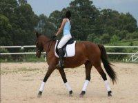 Scuola equitazione Gallura