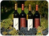 I vini prodotti in azienda