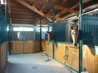 Pacchetti di lezioni equitazione base