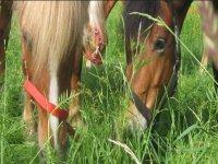 Trekking equestri per piccoli gruppi