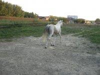 Eleganti cavalli